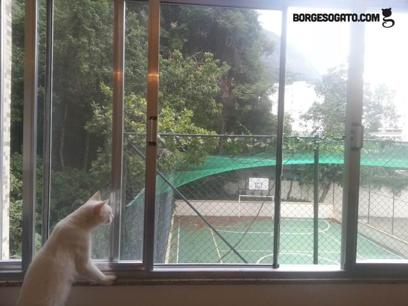 Revelado o mist rio da tela invis vel borges o gato for Red transparente para gatos