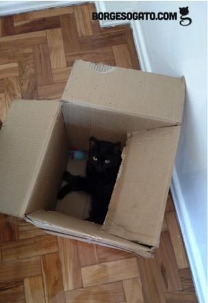 Eu, com folguinha na caixa