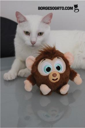 borges-macaco