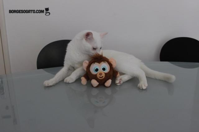 borges-macaco2