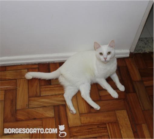 gato-deitado