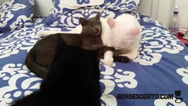 tres-gatos1