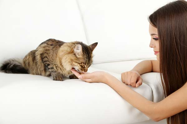 Cat-on-a-sofa-shutterstock_208357807