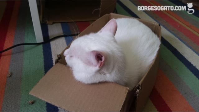 caixa-tapete2