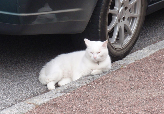 gato-rua