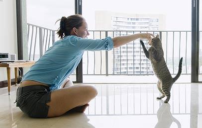 treinamento-gatos