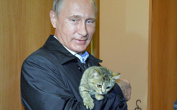 Putin-cat_3429903b