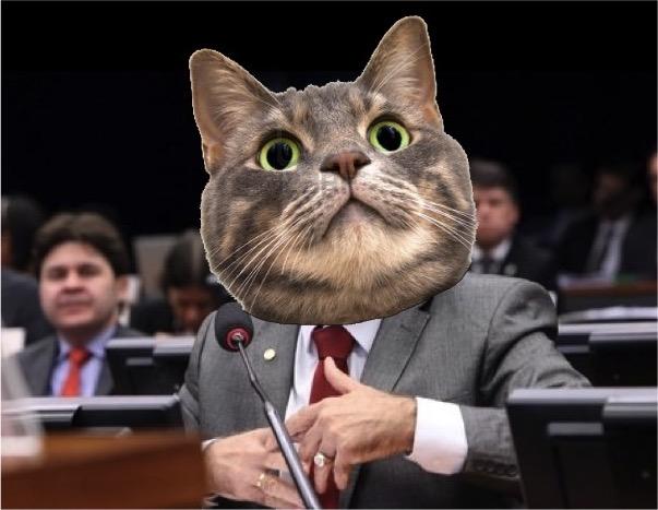 deputado-gato