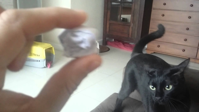 gato-bolinha-de-papel