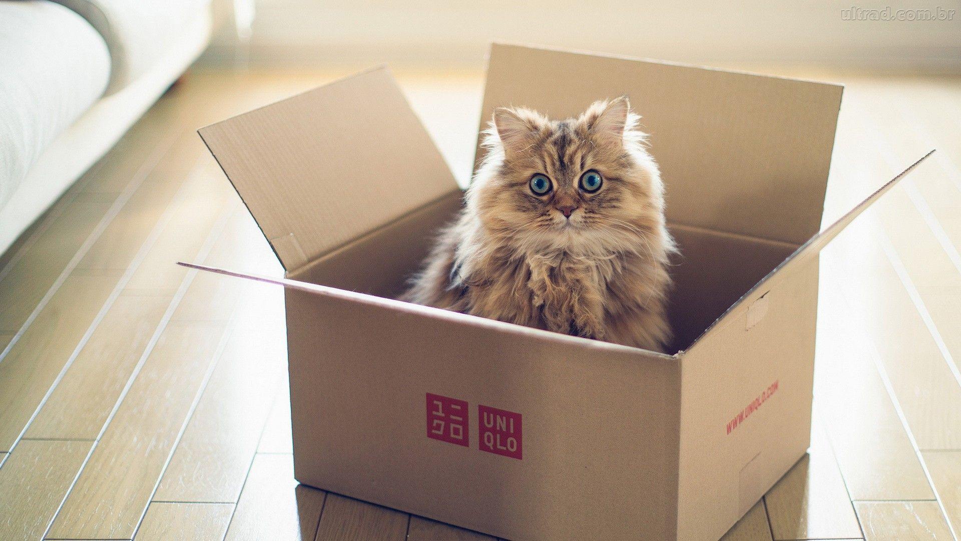 gato-caixa