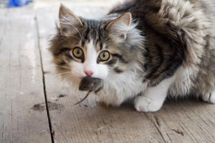 gato-presente