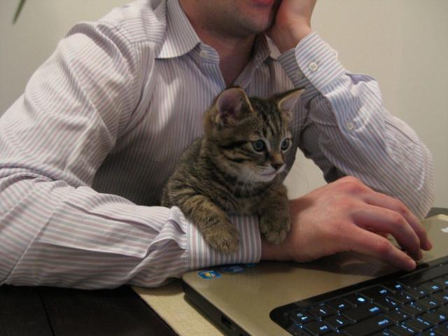 gato-trabalho