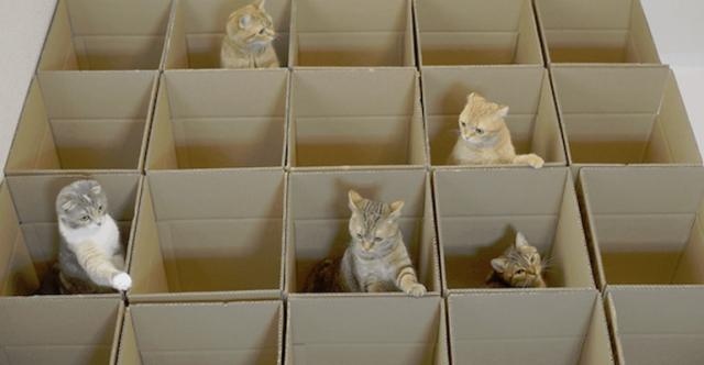 gatos-caixas