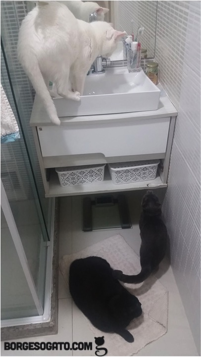 reuniao-banheiro1