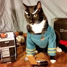 cat-nerd-8