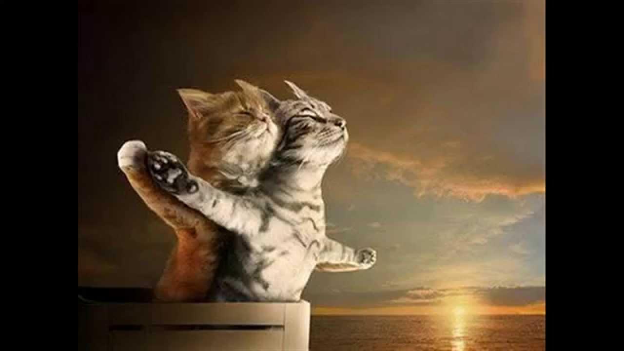 Gato - Titanic