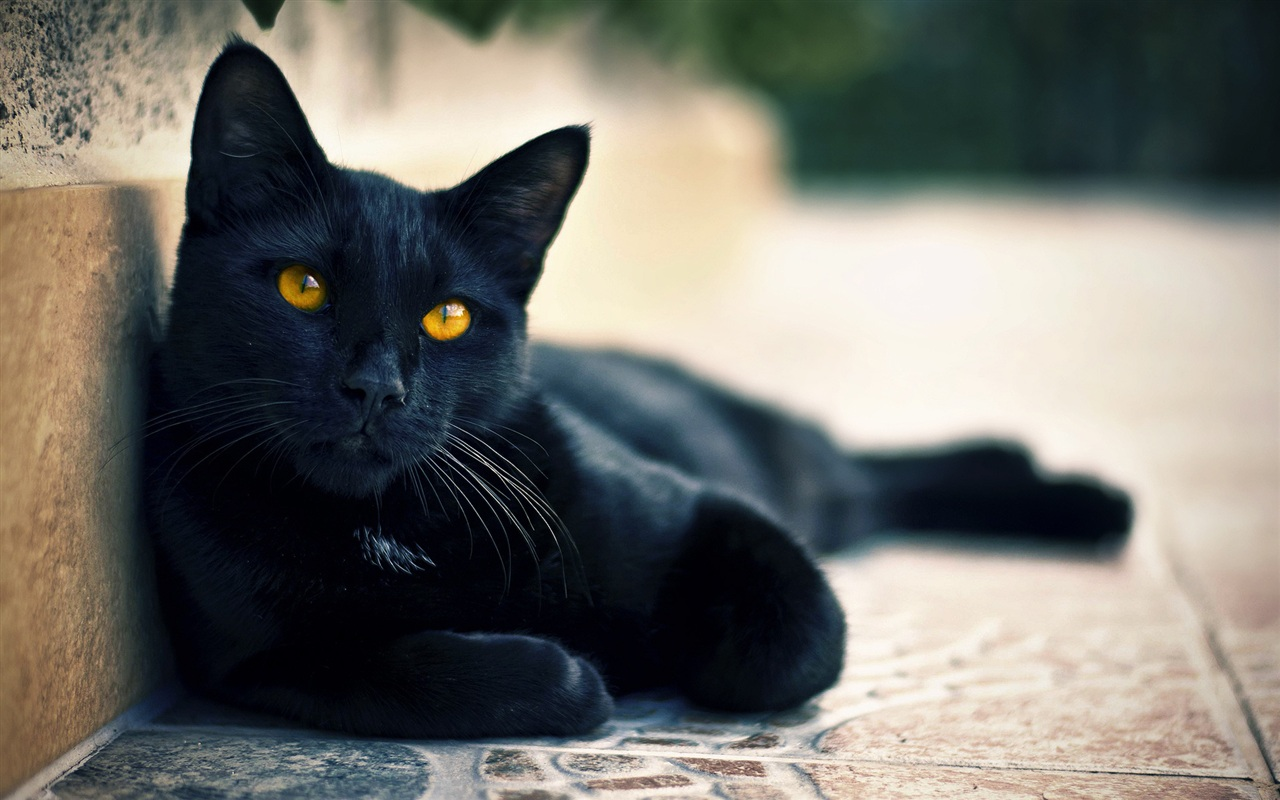 Street-black-cat-eyes_1280x800