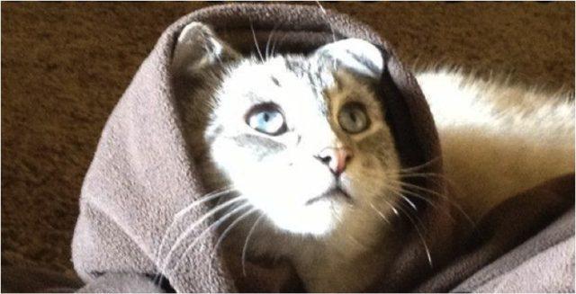 cat-jesus