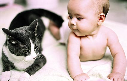 gato-bebe
