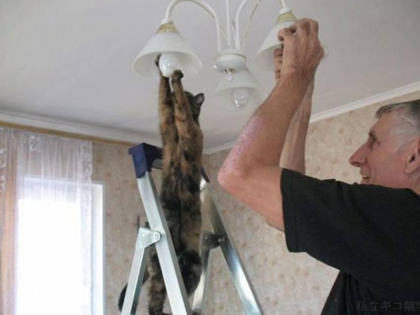 gato trocando lampada