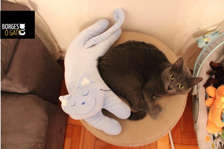 pessoa-e-outro-gato