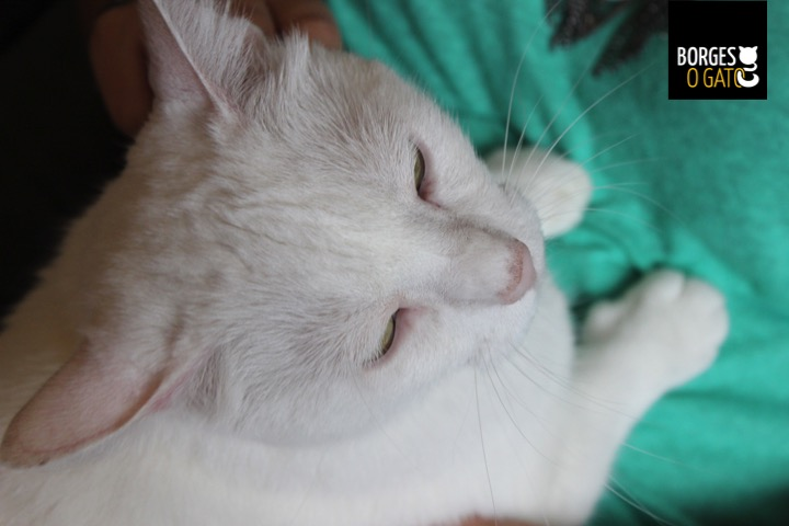 gatinho-sono