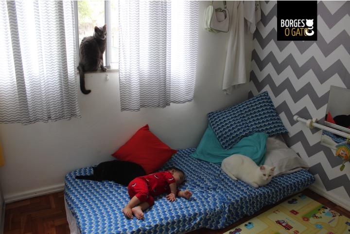 gatinhos-dormindo