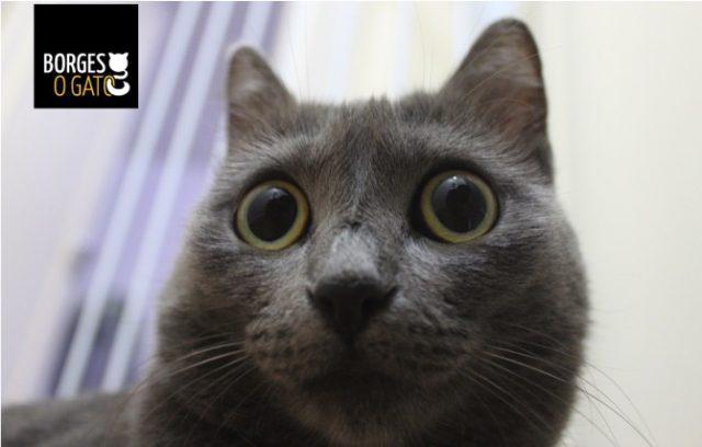 gato_cinza
