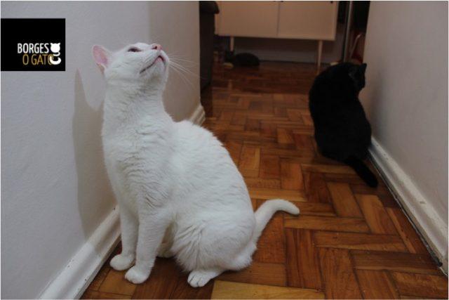gatinhos-olhando