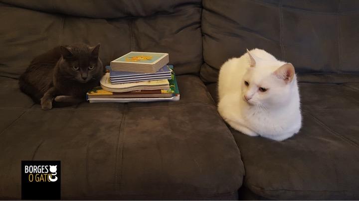 gatos-livros