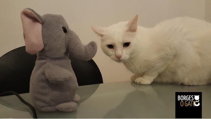 gato-elefante