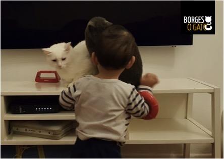 gatos-menino