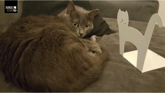 pessoa-gata-e-gato