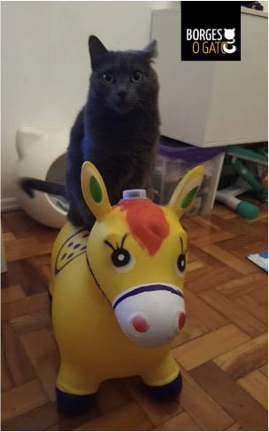 pessoa_cavalo