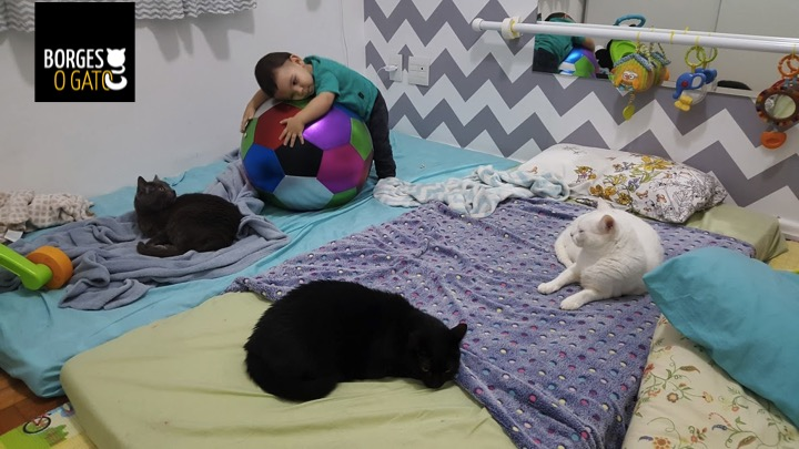 chico-cama-gatos