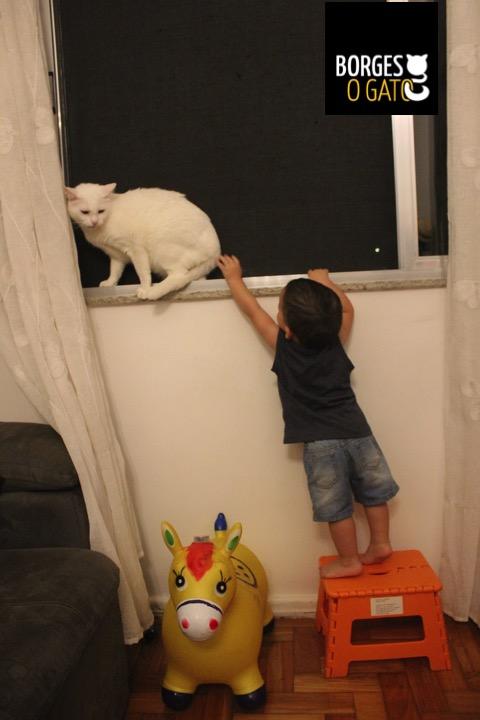 borginho-janela-chico