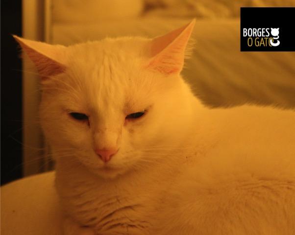 borginho-sono